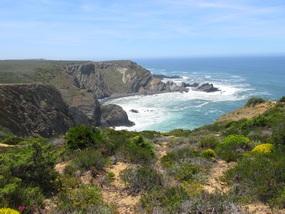 Foto: Natur an der Westküste der Algarve