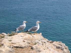 Foto: Möwen der Algarve