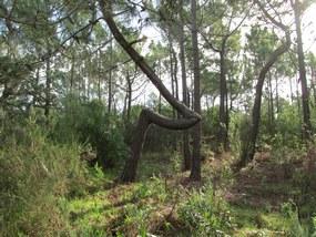 Algarve Wanderung an der Westkueste bei Bordeira