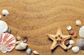 Erdgeschichte Strand mit Muscheln