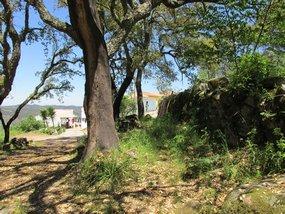 Foto: Portugal Algarve Monchique Bauernschaft