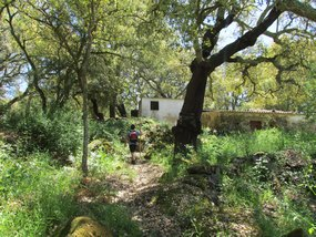 Foto: Portugal Algarve Monchique Privatweg