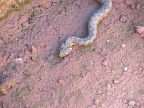 Foto: Eine Schlange bei der Wanderung nahe Silves