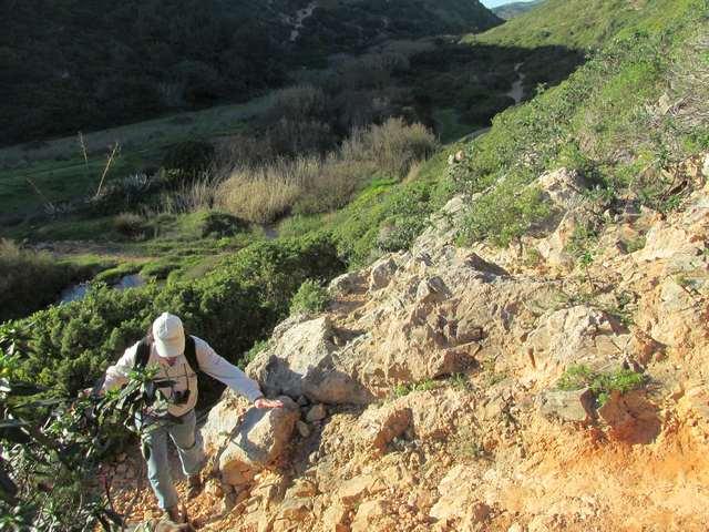 Steile stark bewachsene Pfade bei Salema