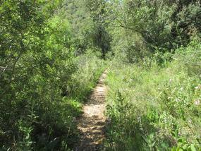 Natur pur beim Wandern nahe Paderne