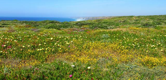 Flora der Algarve im März