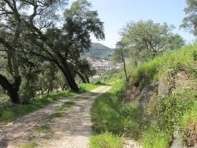 Feedback zu Wandern mit Uwe, Waldweg in der Serra de Monchique