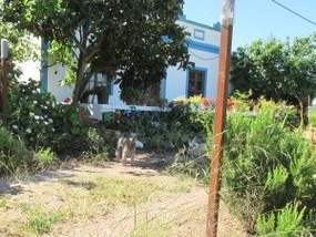 Hund und Hausbepflanzung Algarve-Wanderung Silves