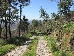 Foto Wanderung vom Foia nach Caldas de Monchique