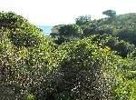 Foto Wanderung Carvoeiro - Armação de Pêra
